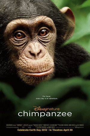 Chimpanzee the Movie, presented by Disneynature Watch the Trailer, it is Moving with a capital M.