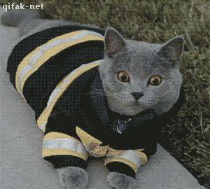 O Planeta dos Gatos.