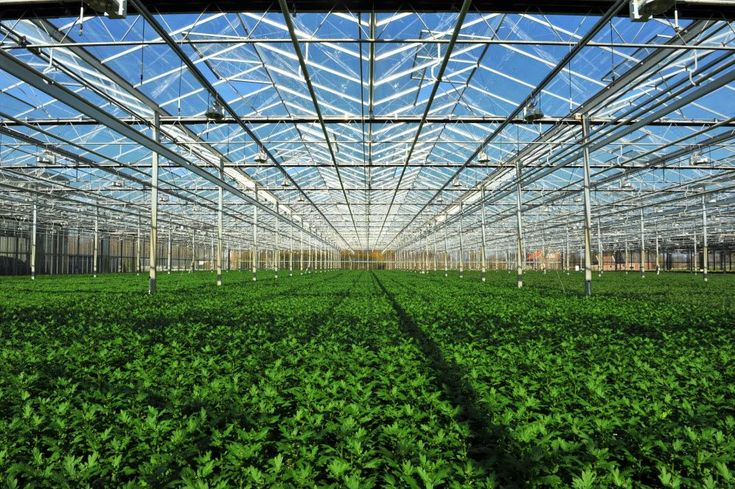 Achieving Maximum Yields With the Sea of Green Growing Method