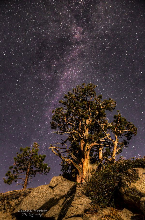 Moonlit Pines by LeashaHooker.deviantart.com on @deviantART