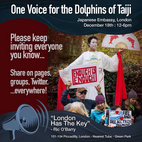 taiji dolphins haenlin connor The cove is a two-pronged issue movie — taiji's dolphin killings and the fact that dolphin meat is incredibly high in mercury, the toxic metal but in order to win sympathy from western.