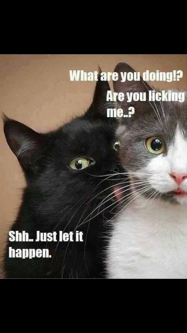 Bahahahaha!!