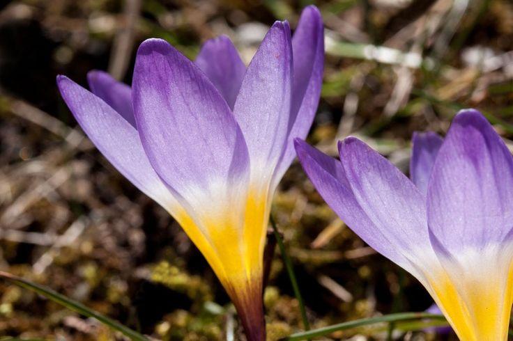 New free stock photo of nature flowers flower #freebies #FreeStockPhotos
