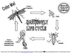 Dragonfly Life Cycle Coloring Page