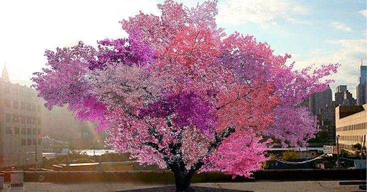 """Si chiama Sam Van Aken ed è la nuova rivelazione della botanica mondiale con i suoi """"Alberi dei 40 Frutti"""", divenuti famosi in tutto il mondo come un connubio perfetto fra arte e scienza botanica. Dur"""