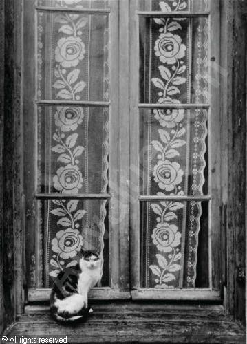 BRASSAÏ  -- Gyula Halash, 1899-1984 (Hungary)  Title : Untitled (cat on windowsill)  Date : 1953 .