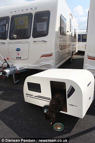 "Stray cat (named ""Cat"") gets her own 3 ft. luxury trailer after being taken in by RV dealer in England."