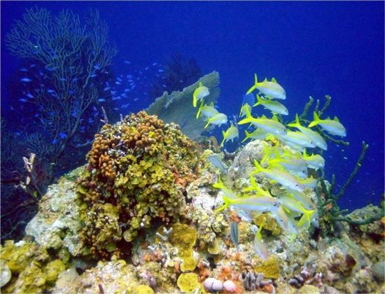 Beautiful Coral Reefs | Coral reefs