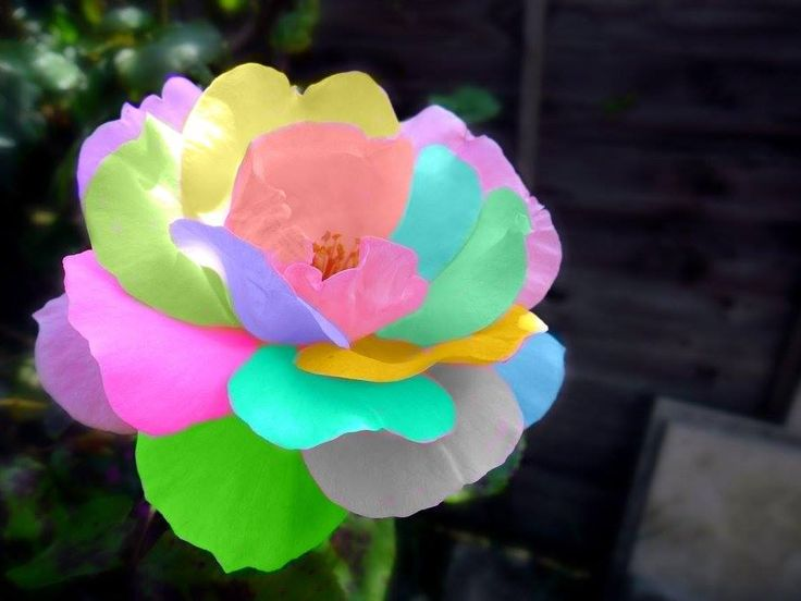753 best 3 flowers roses 3 images on pinterest beautiful rainbow flower by m bphotography on deviantart mightylinksfo Image collections