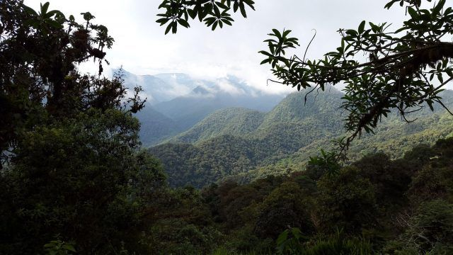 Can Coffee Farms Support Reforestation in Ecuador? - Perfect Daily Grind
