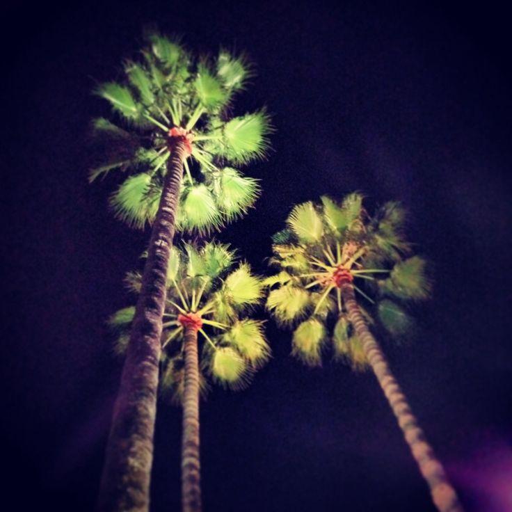 Night Palms, Cannes