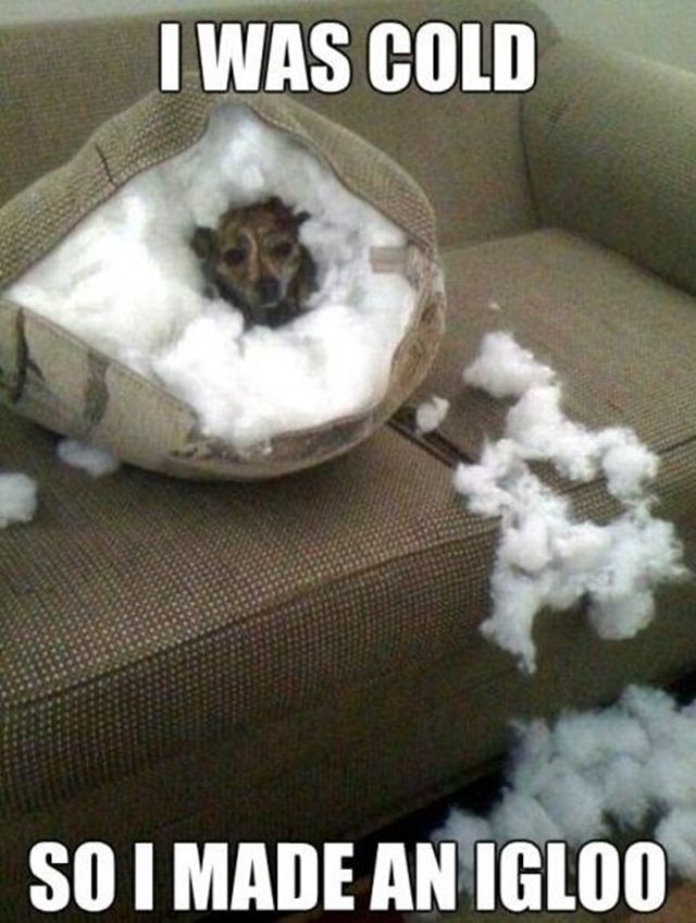 dog exploding pillow - Google Search