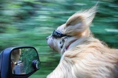 Hund am Autofenster
