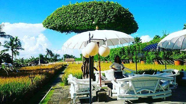 As a child, the paddy was my playground   #bestview @sardinebali  #bestphotooftheday #igersbali #paradiseisland