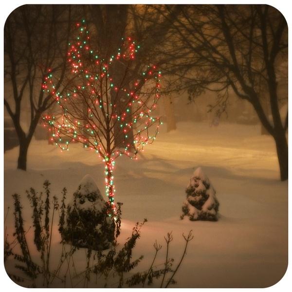 Christmas snowWinter Snow, Christmas Time, Silent Night, Christmas Snow, Wonder Time, Winter Wonderland, Pine Cones, Peanut Butter, Christmas Trees