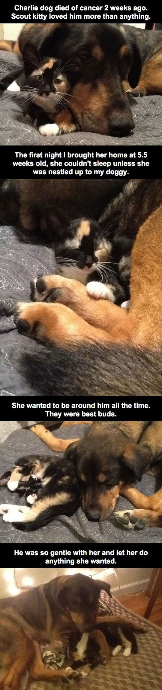 best pets u animals images on pinterest funny animals animals