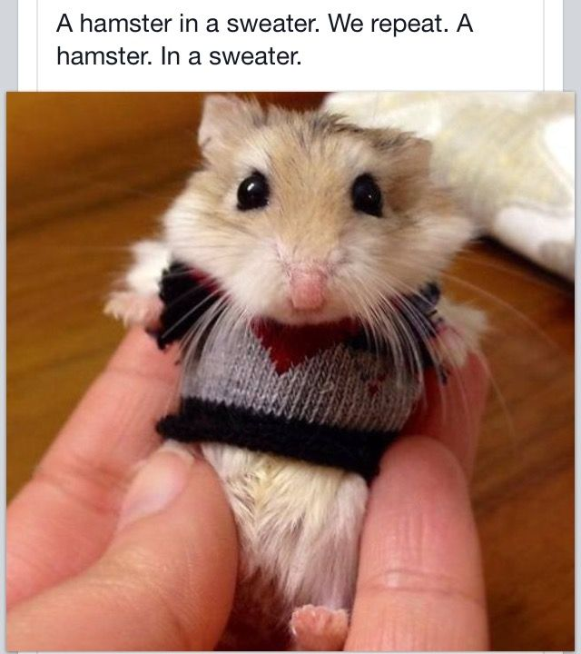 Knitting Pattern For Hamster Jumper : 17 Best images about Pinterest made me GiGgLe! on Pinterest Left out, New g...
