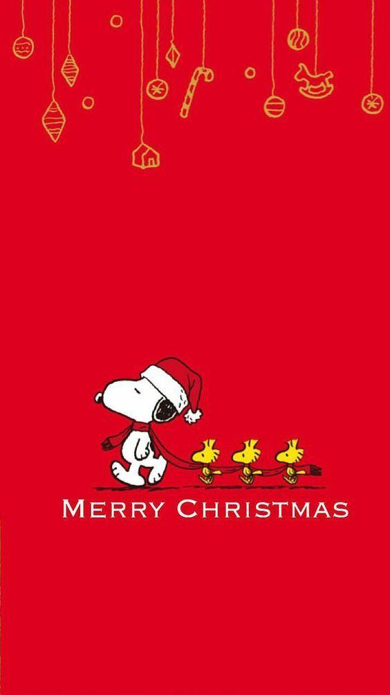 Ich wünsche Ihnen frohe Weihnachten   – Merri Christmas!!