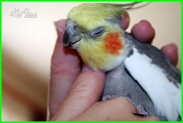 Burung Falk Si Parkit Australia Beautiful Birds Animals Birds