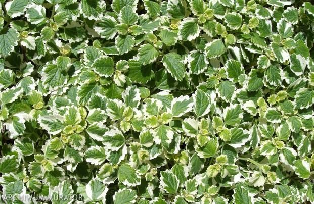 Rosliny Balkonowe Odporne Na Wiatr Plants Herbs
