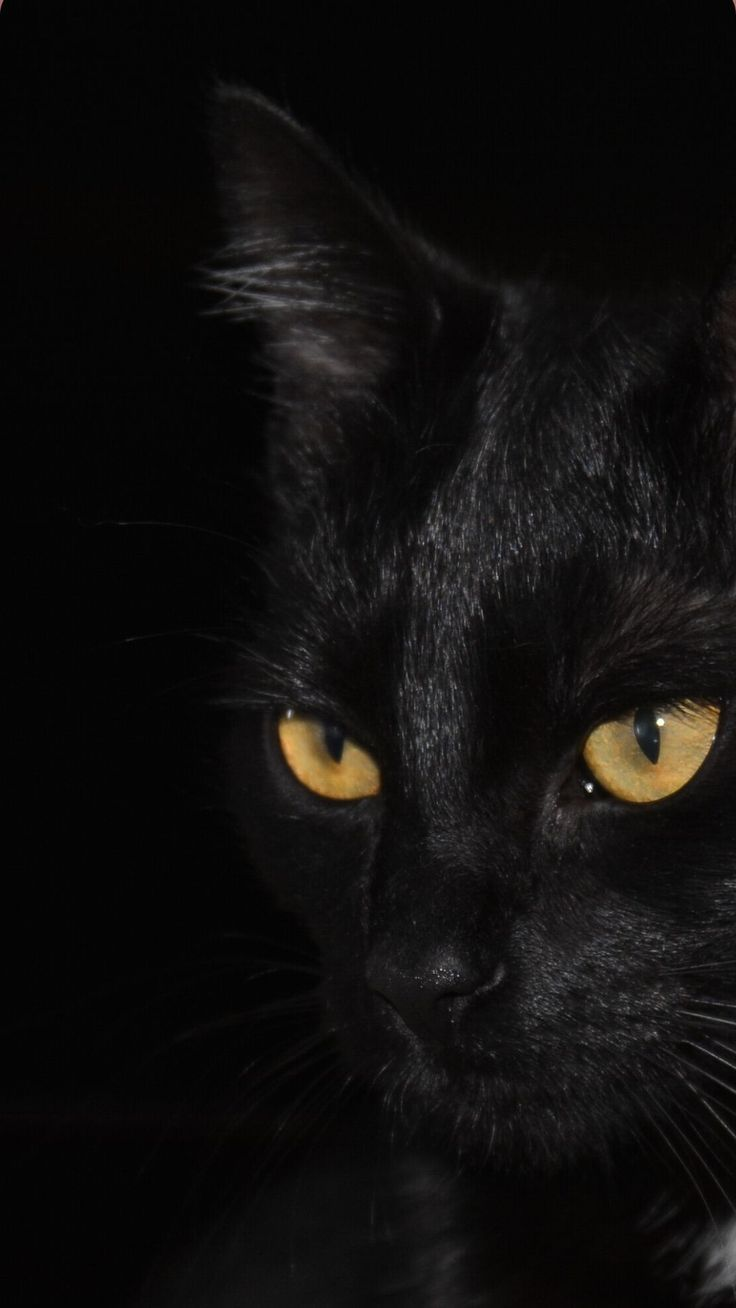 Cute Black Cats Wallpaper Art Drawing Marvel Painting Halloween Names For Photography Quotes Cute Cat Wallpaper Cat Wallpaper Cute Black Cats