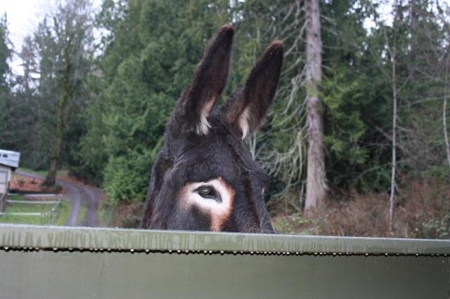 donkey care