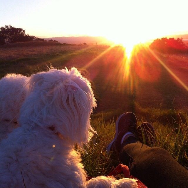 Peace with my dogs