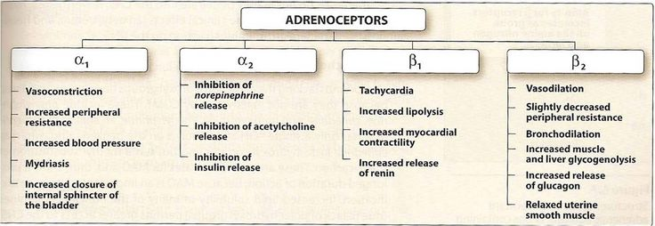 Sympathomimetics - STEP1 Pharmacology - Step 1 - Medbullets.com