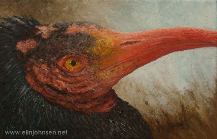 Northern Bald Ibis/Skallet ibis (Geronticus eremita). 2015. Oil on canvas. Olje på lerret. #endangered #endangeredspecies #art #wildlifeart #painting #oilpainting #artwork #artforconservation #oiloncanvas #nature #bird #conservation #birdconservation #wildlifeconservation #portrait #northernbaldibis #nature #kunst #maleri #oljemaling #fugl #verdtåbevare #truetdyreart #oljepålerret
