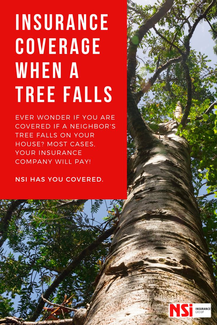 Insurance coverage when a tree falls do you know if