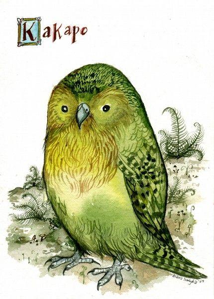 110 best Kakapo art images on Pinterest | Birds, Bird art ...