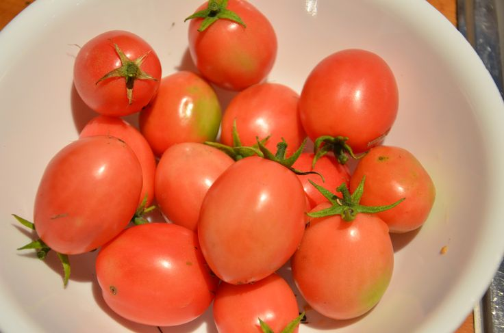 How to grow Thai Pink Egg Tomatoes - perfect for cooler climates!