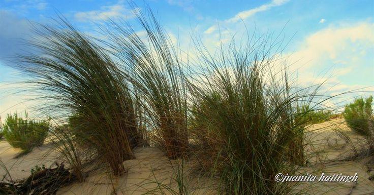 #Dunes -Kleinmond Main Beach
