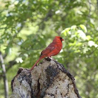 Pretty red bird
