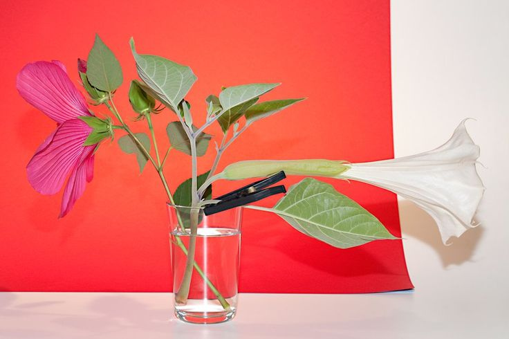 Luciano Fileti - OBJECT 8059 (Hibiscus moscheutos, Datura stramonium, South Orange, NJ, 2016), Photograph