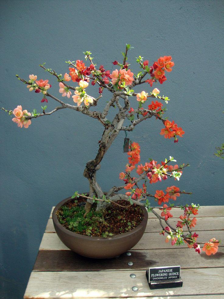 Blooming Bonsai tree (Day 3) | At the Brooklyn Botanical ...