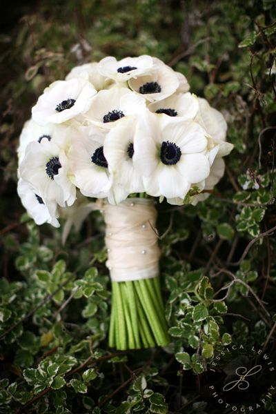 White anemone bouquet. These are beautiful. It would look really nice with black bridesmaid dresses.