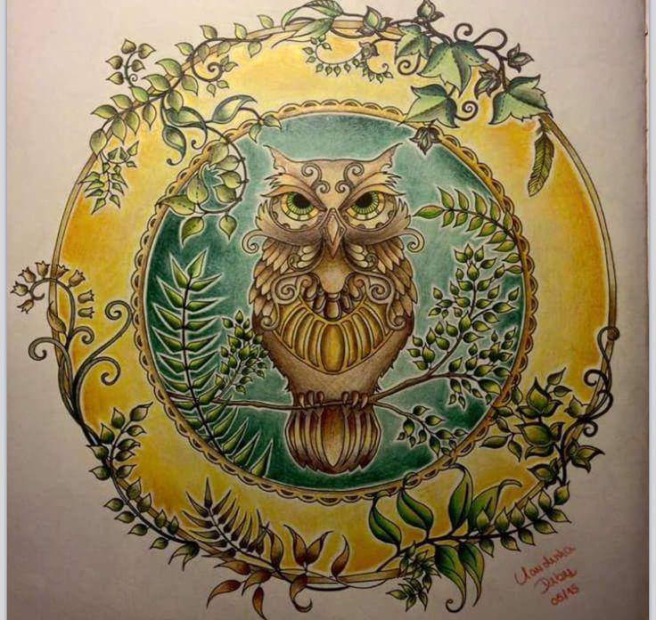 Owl Enchanted Forest Coruja Floresta Encantada Johanna Basford