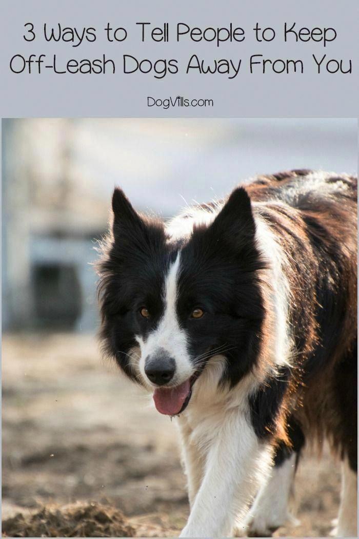 Train Dog S Brains Aggressive Dog Dog Training Dog Leash