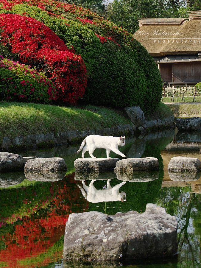 Okayama Korakuen Garden in Japan Walking Fluff photo by Kaz Watanabe