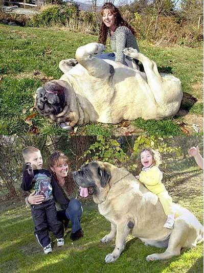 big dog, ecstacic girl                                                                   want!!!