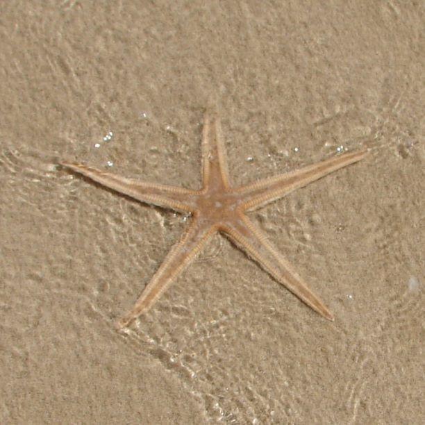 A great find by Karen at Rockingham Beach. Have you ever stumbled across one of these? #CaptureTheCover #Rockingham #starfish #beach #star