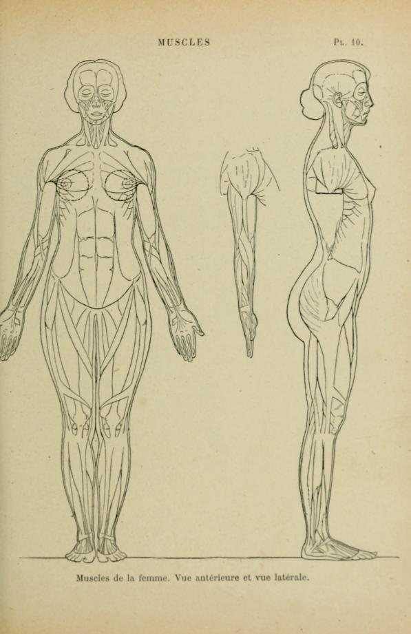52 best anatomy images on Pinterest | Human anatomy, Figure drawing ...