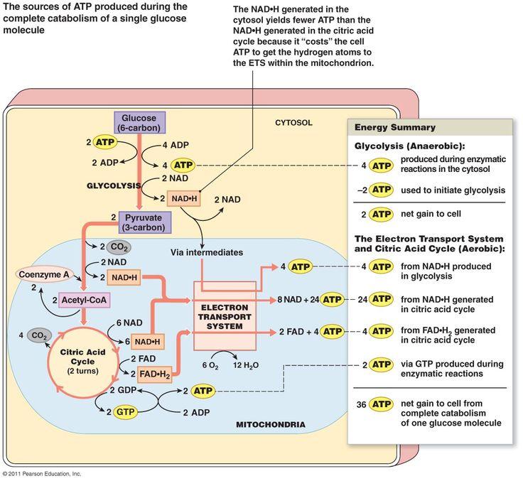 epub Витамин