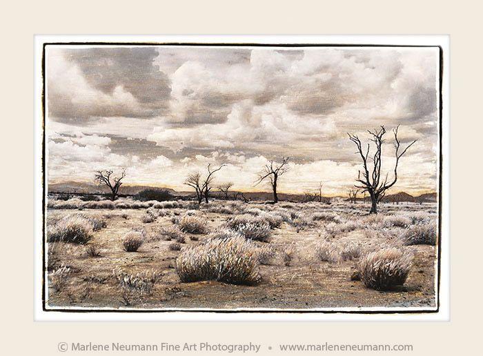 A Desert Walk