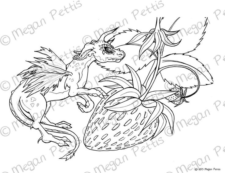 Strawberries And Scales Tiny Dragon Adult Coloring Page Instant Download Digital File