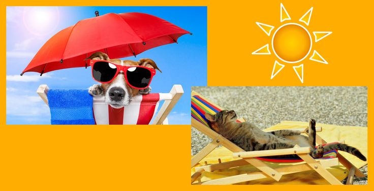 """Con l'arrivo del caldo si sta all'aria aperta con i propri amici a quattro zampe: si fanno passeggiate, si gioca e si va in vacanza. Attenzione però ai colpi di calore!   Facciamo nostro il motto """"Vacanze tutti insieme"""": non abbandonate i vostri amici a quattro zampe.  #amicia4zampe #cane #gatto   #noabbandono #colpodicalore"""