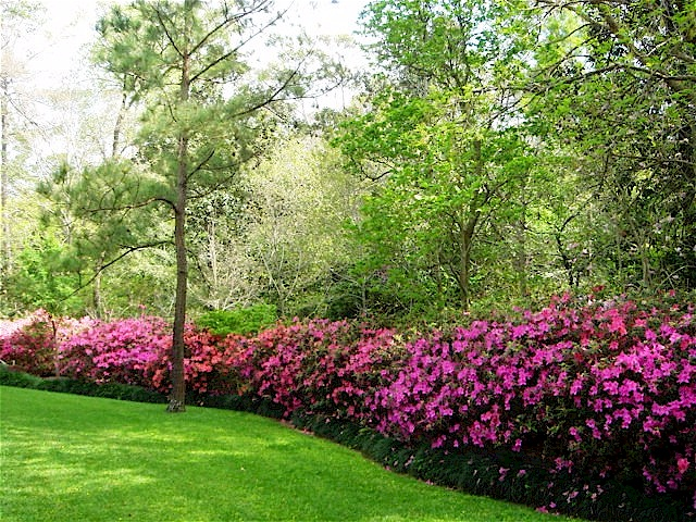 Secret Garden: Best 25+ Monkey Grass Ideas On Pinterest