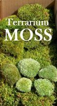 Live Moss for Terrariums:  Moss has been around for 350 million years, and thrives in the same humid, CO2-rich micro-environment as that found inside an enclosed terrarium.    Moss has no true roots, so it absorbs all of its moisture and nutrients through its simple, yet elegant, leaf structures. That's why creating a terrarium with moss is incredibly easy - simply place the moss inside the terrarium and water. #containergardeningideasforsun