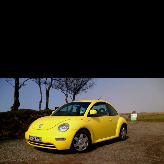 Moor beetle